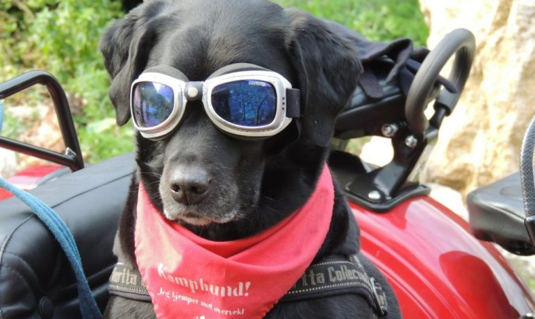 como llevar a tu perro en moto