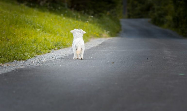 crece el numero de abandonos de animales