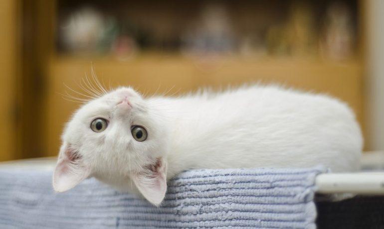 lo que no debes hacer al criar gatos