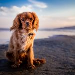 consejos para el cuidado de los perros en la playa