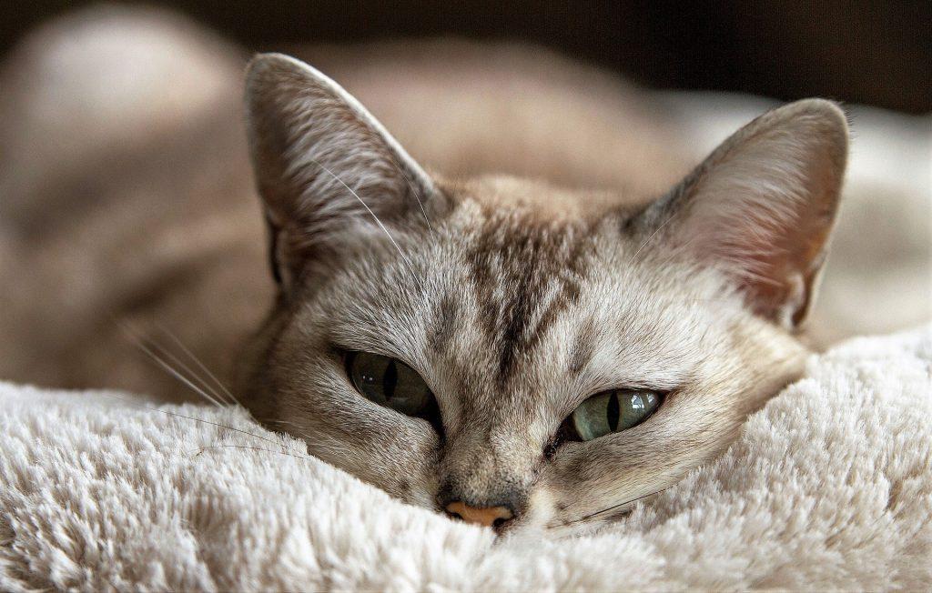 mascotas en el hogar gatos