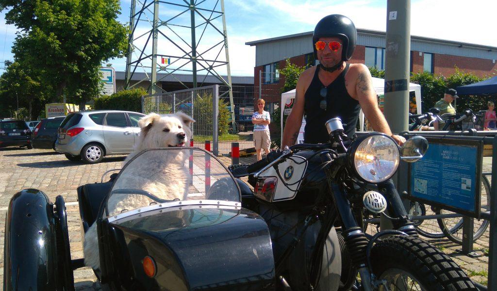 como llevar a tu perro en moto consejos