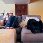 las mascotas en el hogar