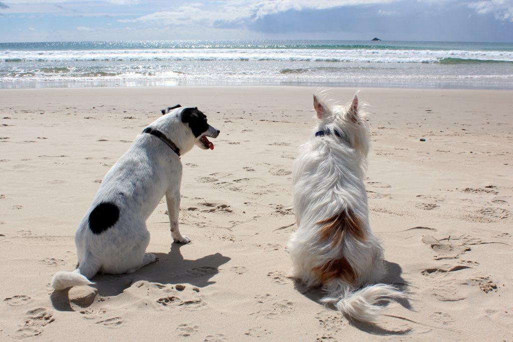 el cuidado de los perros en la playa
