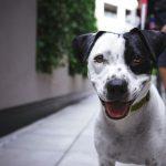 perro-suelto-barcelona
