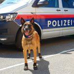 Fuente vía Facebook Polizei Wien