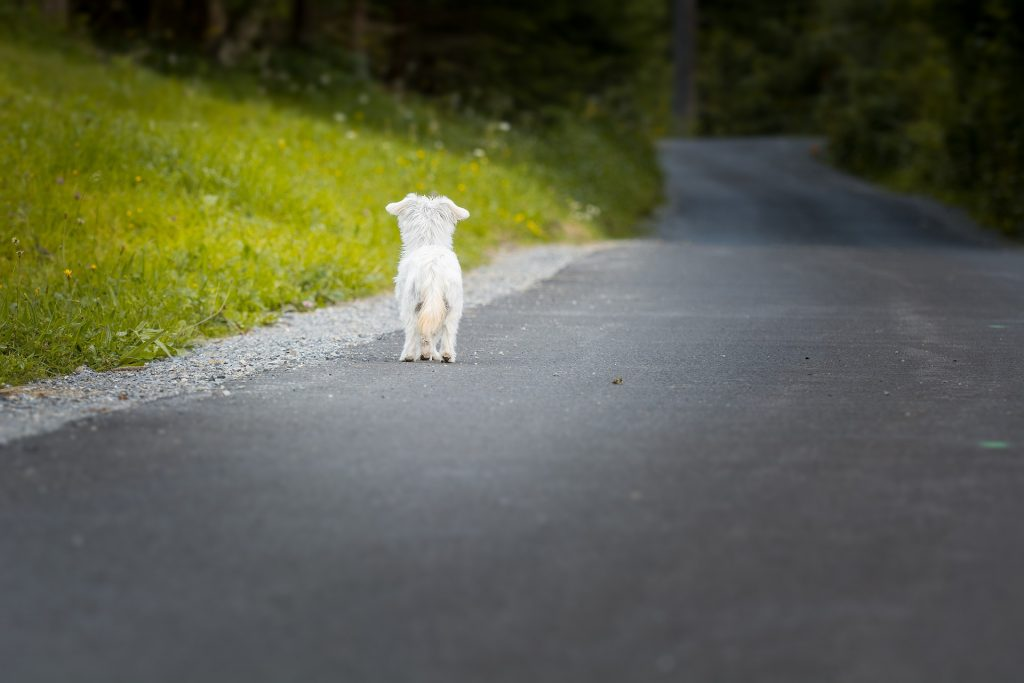 se abandonan mas animales
