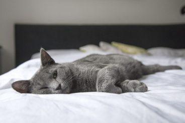 beneficios de dormir con un gato