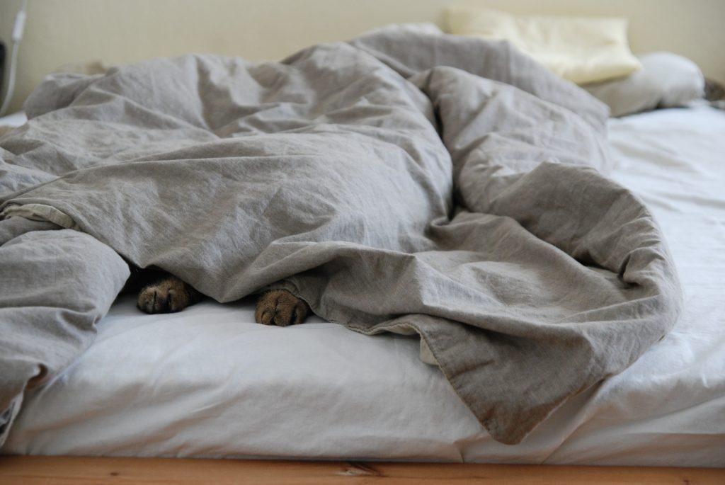 beneficios de dormir con un gato a tu lado