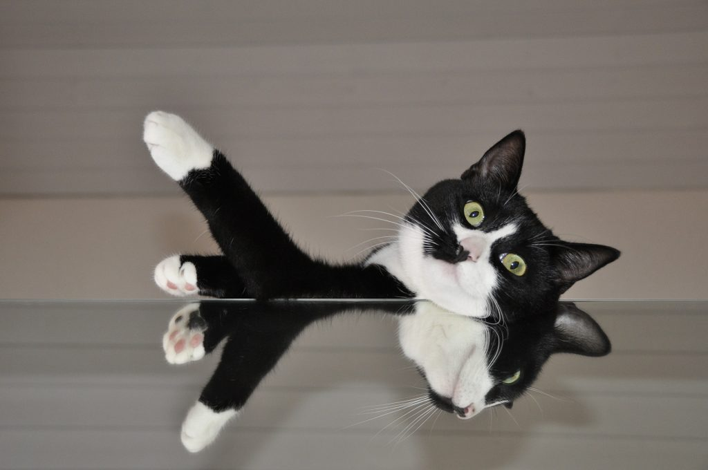gato sordo