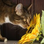 cuidar de un gato sordo