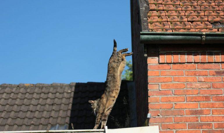 síndrome del gato volador