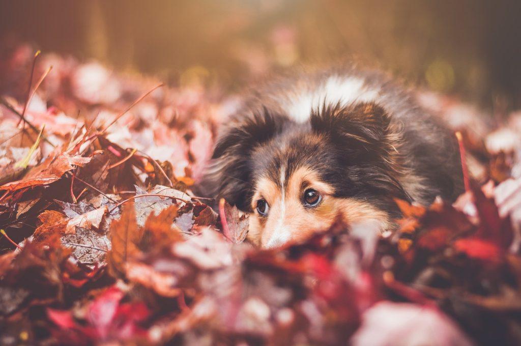 los perros en otoño y sus cuidados