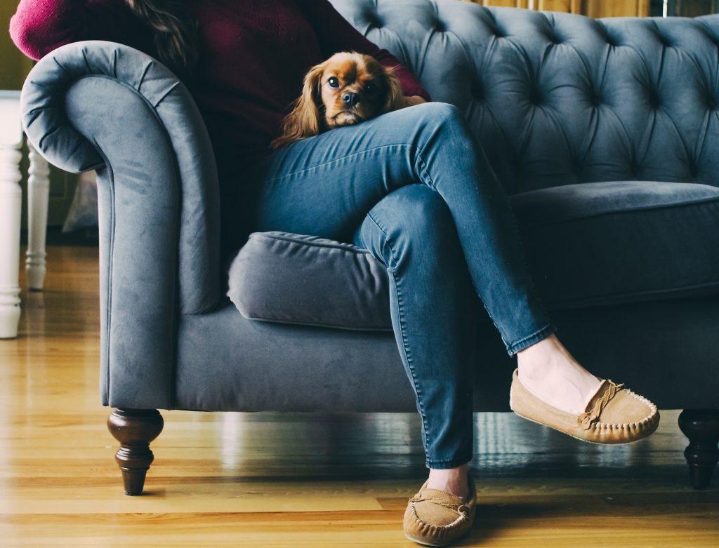 los perros pueden ver la tele si o no