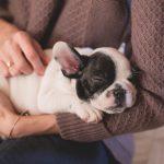hacer masajes para perros