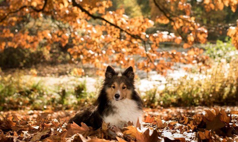 los cuidados de los perros en otoño