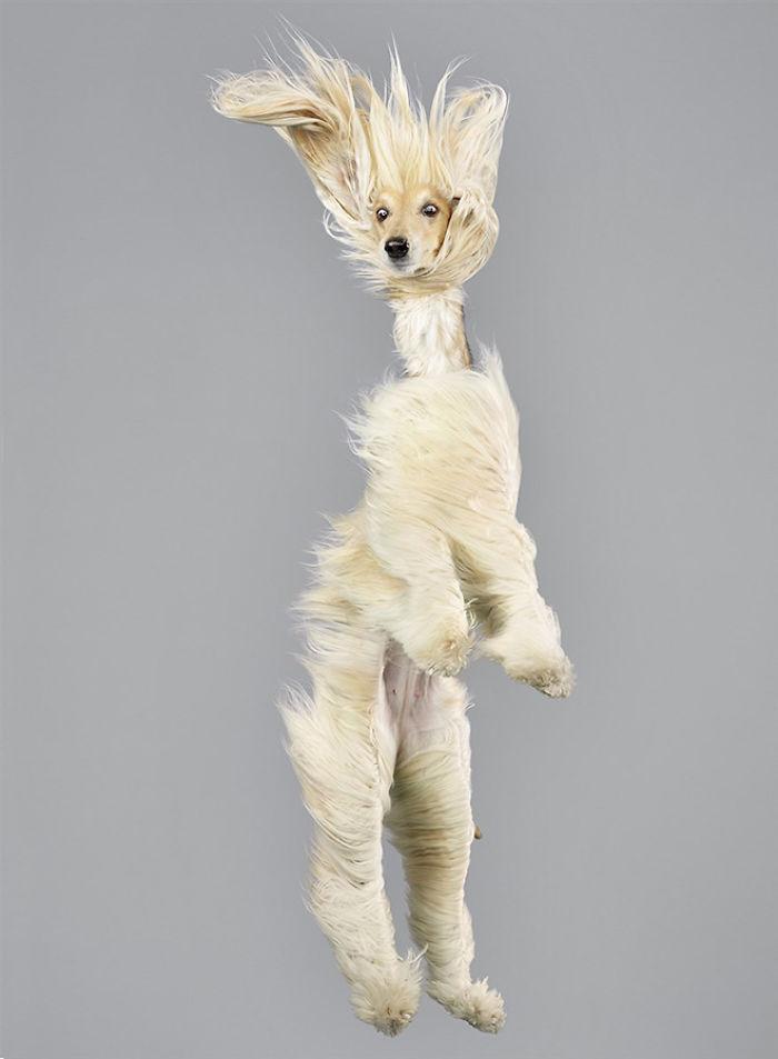 fotos de perros volando
