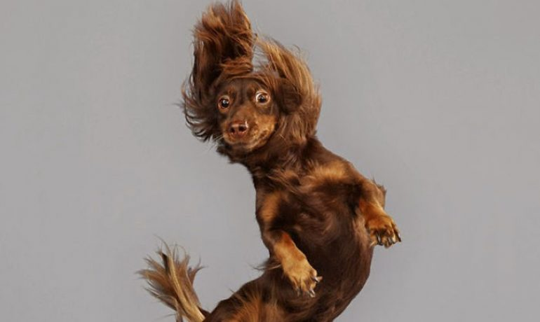 perros volando by Julia Christe
