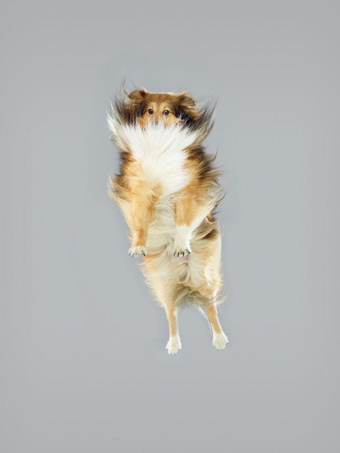 fotos de perros volando Julia Christe