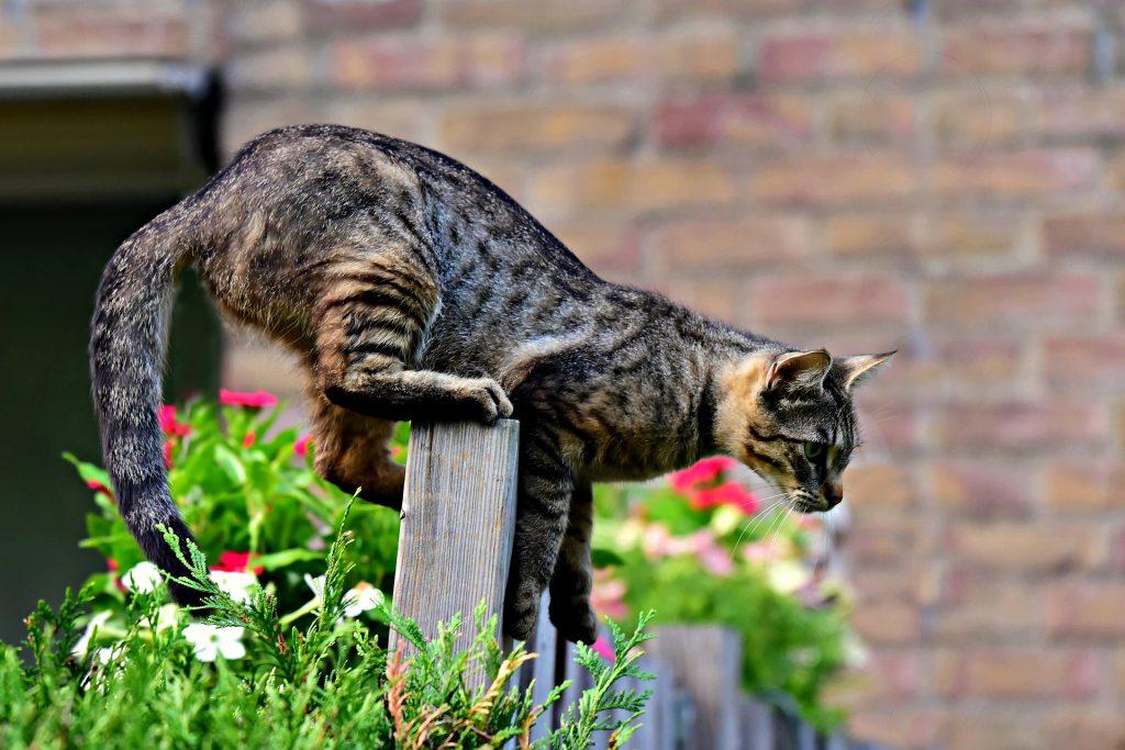 el síndrome del gato volador