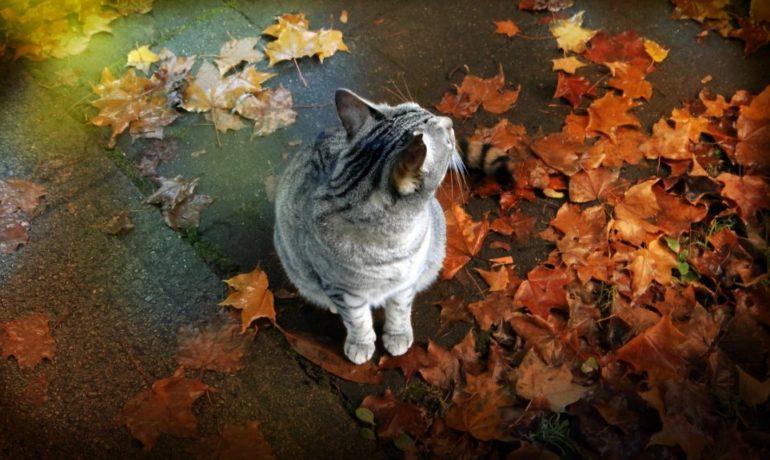 los cuidados especiales de los gatos en otoño