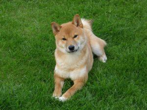 rencor canino