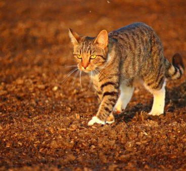 las enfermedades frecuentes de los gatos en otoño