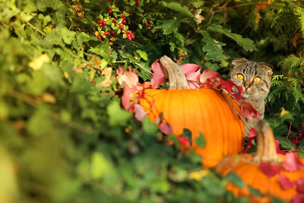 enfermedades comunes de los gatos en otoño