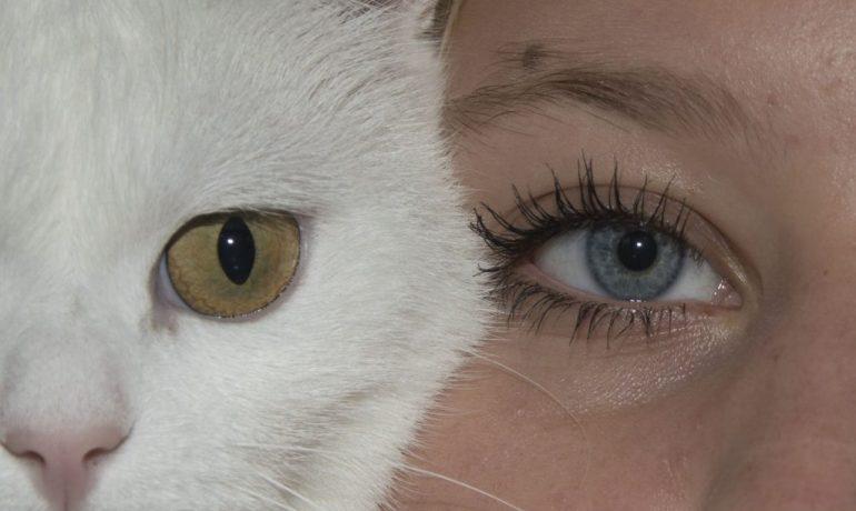 cómo nos ven los gatos