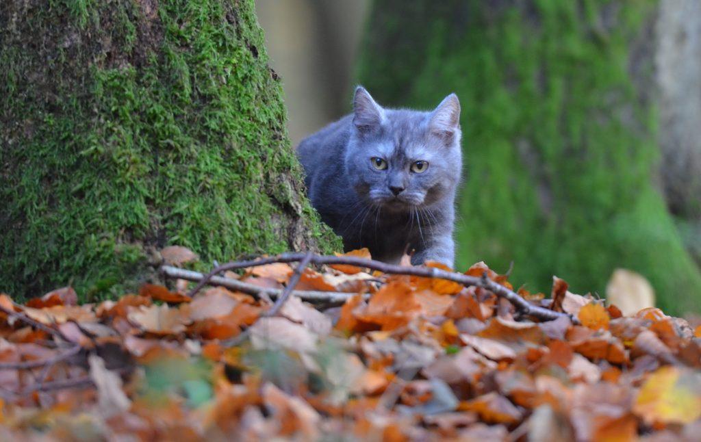 los gatos en otoño