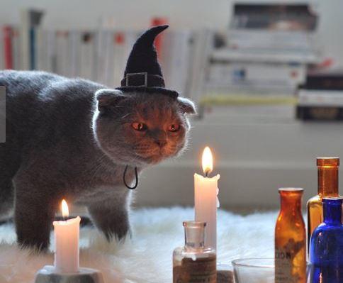 disfraces de halloween para perros gorro de bruja