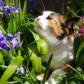 plantas tóxicas para gatos