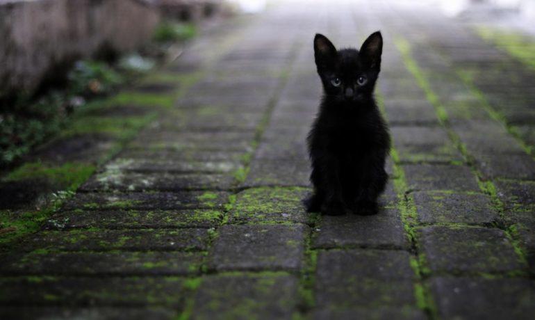 octubre y los gatos negros