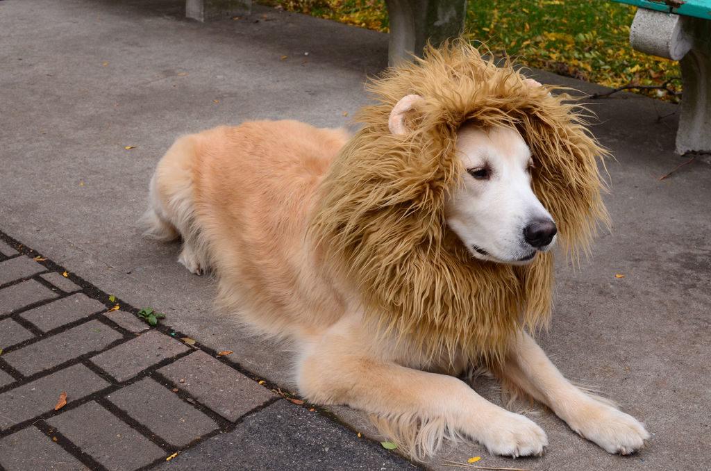 disfraces de halloween para perros león