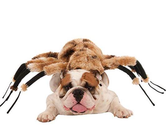 disfraces de halloween para perros araña