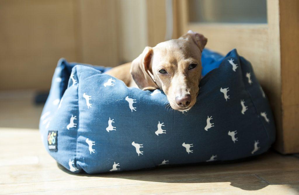 perro limpio en cama