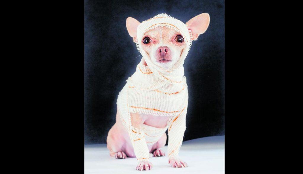 disfraces de halloween para perros momia