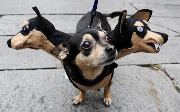 disfraces de halloween para perros tres cabezas
