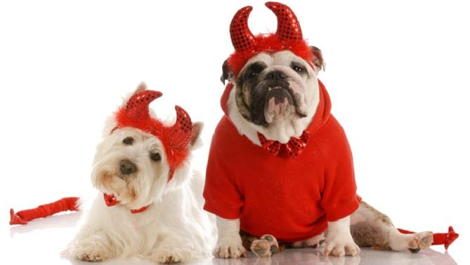 disfraces de halloween para perros demonios