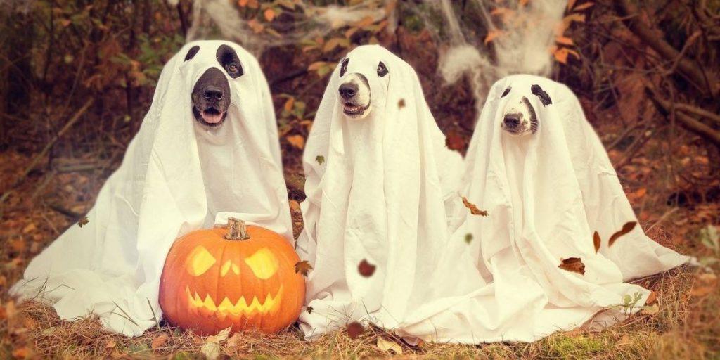 disfraces de halloween para perros fantasmas