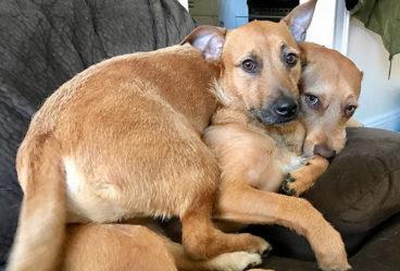 rescata a su perro gemelo