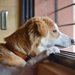 tipos de alergia en perros