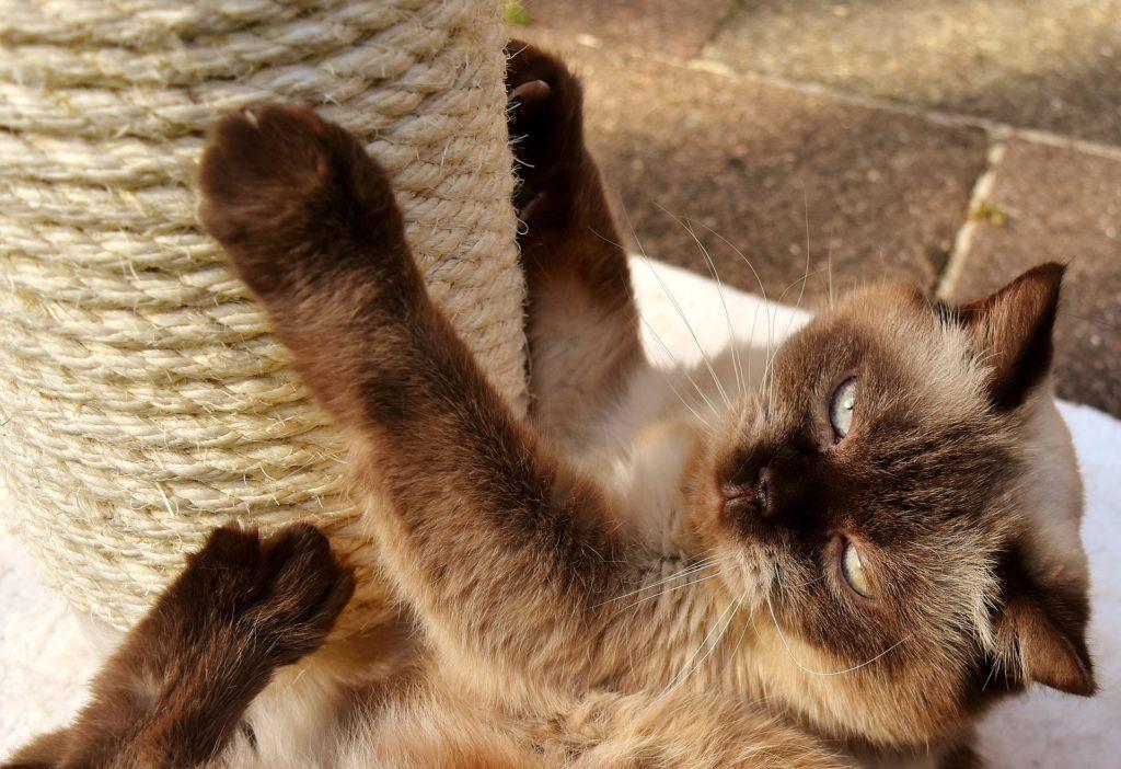 hacer un rascador para gatos casero