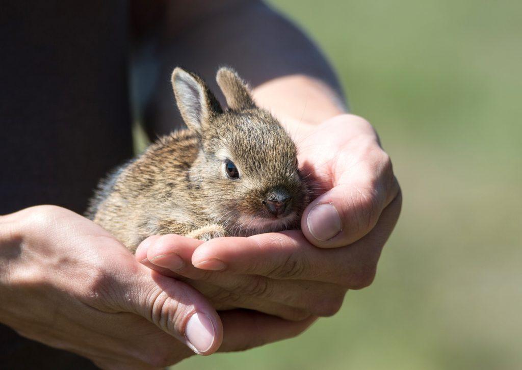 algunas curiosidades sobre los conejos