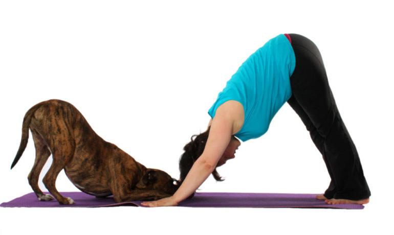 yoga con tu perro