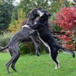 el saludo de los perros