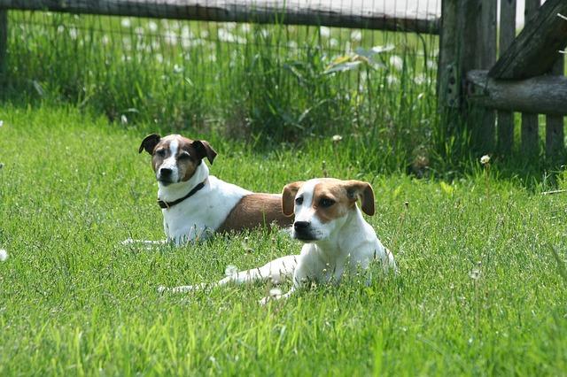 el saludo de los perros o saludo canino