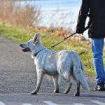 los peligros al pasear a tu perro que puedes encontrar