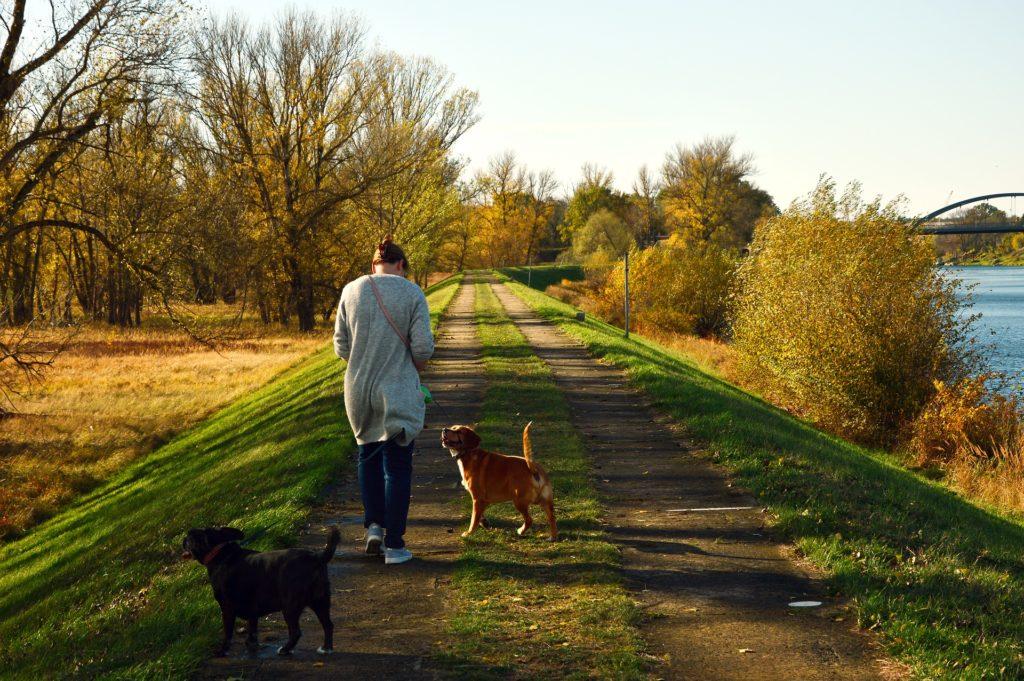 peligros al pasear a tu perro