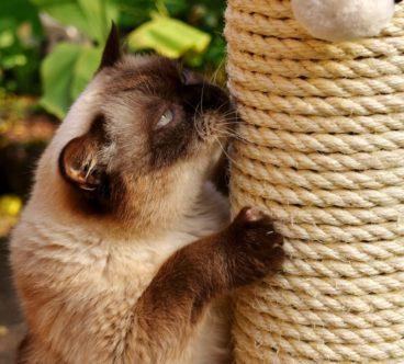 rascador para gatos casero